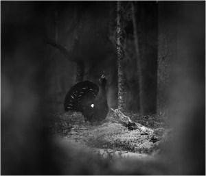 Mystikk i tiurskogen