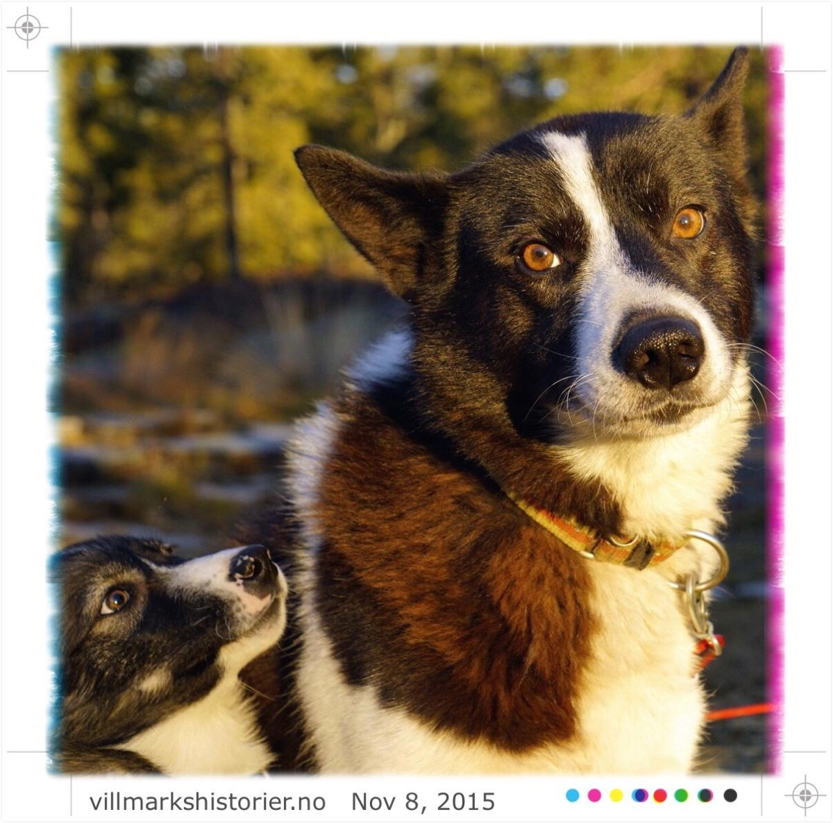 Yatzy, hund og bål